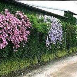Forums.gardenweb.com_.jpg