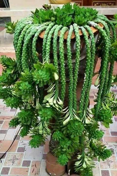 Interessante Pflanzen