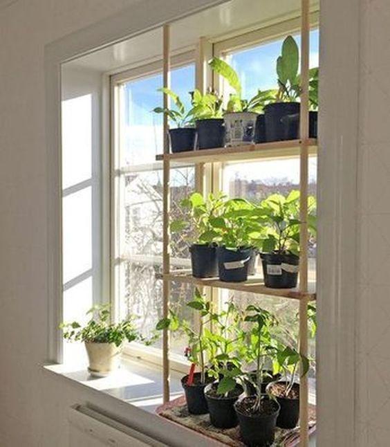 Mini-Garten am Fenster - 12 Pflanzen Dekoideen - nettetipps.de