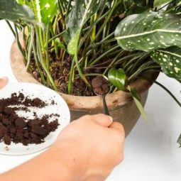 Gardeningsoul.com_.jpg