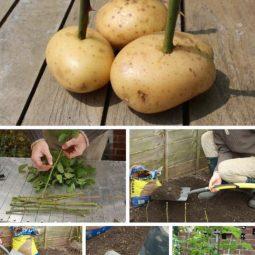 Farmfoodfamily.com 2.jpg