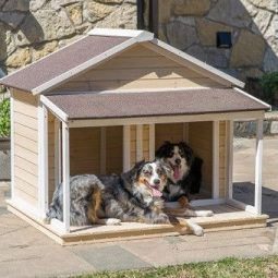 Officialdoghouse.com_.jpg