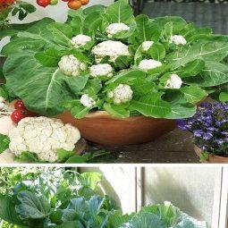 Urban gardening ideas.com_.jpg