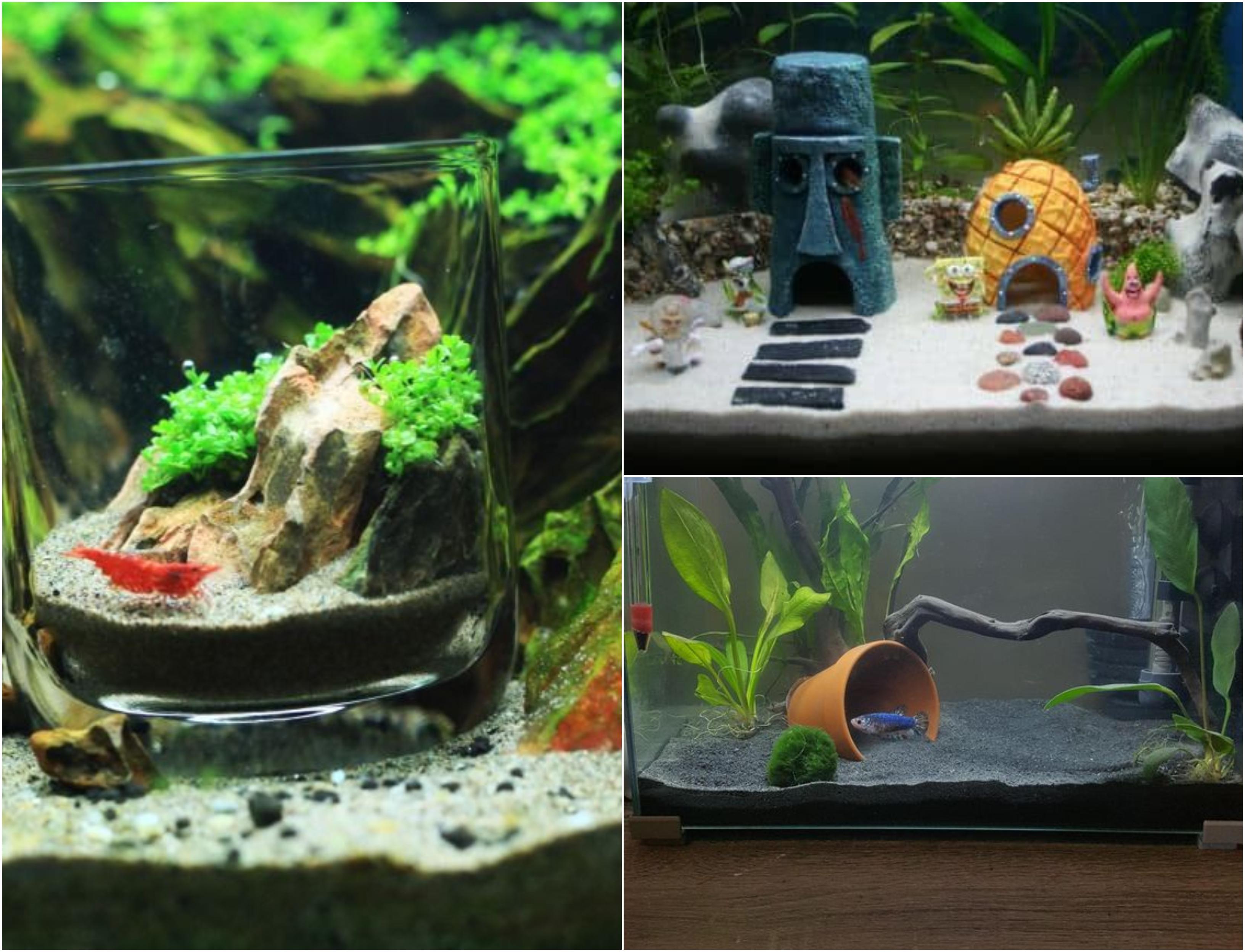 Deko Fur Aquarium Selber Machen 11 Kreative Diy Ideen Nettetipps De