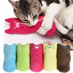 Cattime.com_.jpg