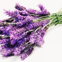 Healthline.com lavender.jpg