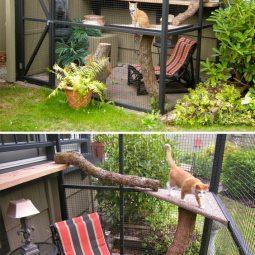 Catsoncatnip.co .jpg