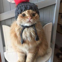 Cattime.com .jpg
