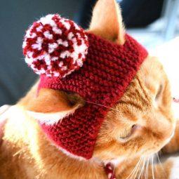 Cattime.com 1 1.jpg
