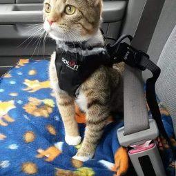 Cattime.com 1.jpg
