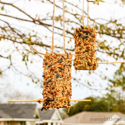 Peanut butter bird feeder 9.png