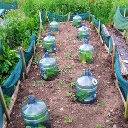 Diy garden cloche ideas 11.jpg