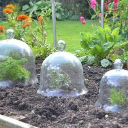 Diy garden cloche ideas 12.jpg
