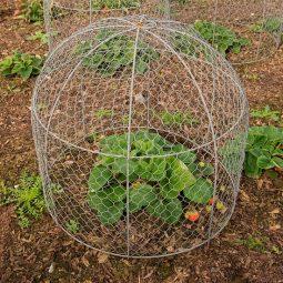 Diy garden cloche ideas 18.jpg