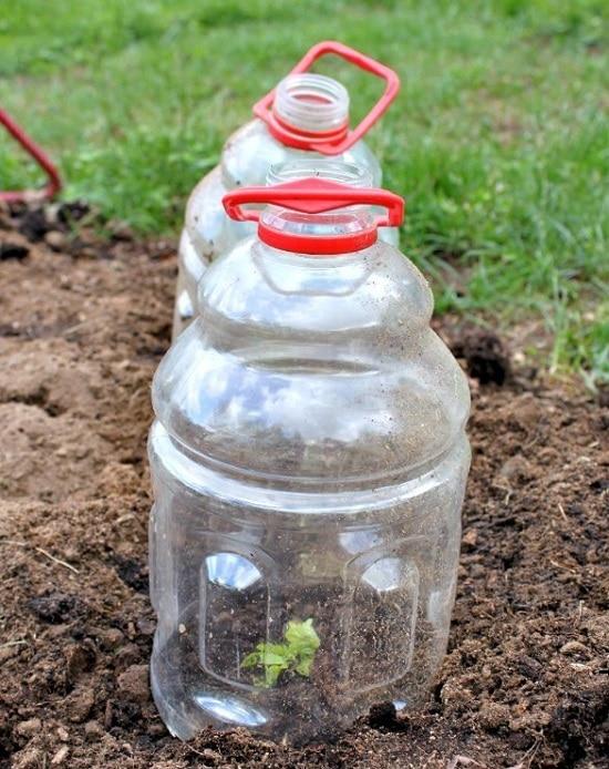 Diy garden cloche ideas.jpg
