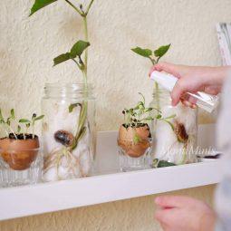 Pflanzenexperimente fuer kinder feuerbohnen gemuesereste upcycling pilze zuechten blumen faerben gaertnern zuhause montessori blog 2 montiminis.jpg