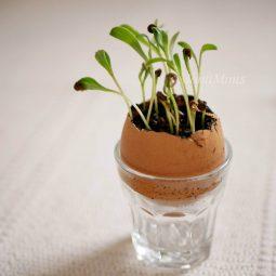 Pflanzenexperimente fuer kinder feuerbohnen gemuesereste upcycling pilze zuechten blumen faerben gaertnern zuhause montessori blog 3 montiminis.jpg