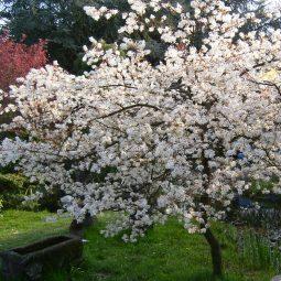 Blutenbaume 1.jpg