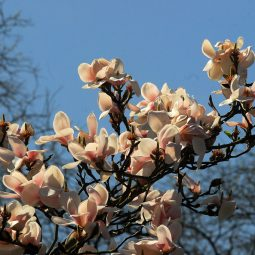 Blutenbaume 4.jpg
